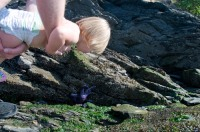Exploring tide pools at Obstruction Pass State Park